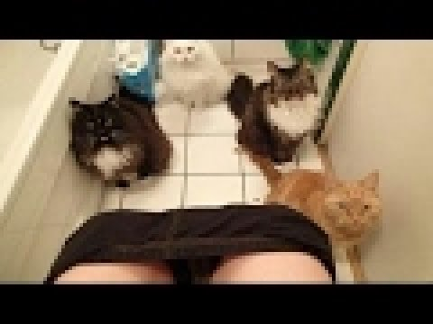 Gatti divertenti video divertentissimi che fanno morire dal ridere 1 youtube - Bambolotti che fanno il bagno ...
