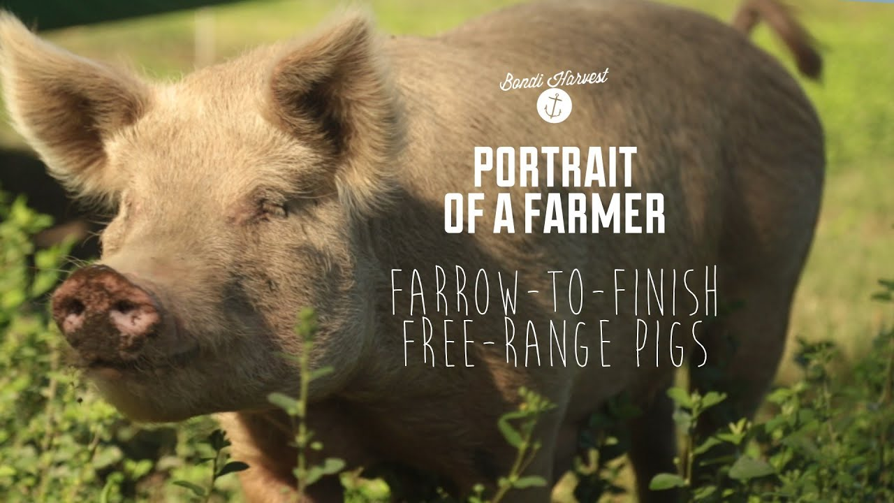 Farrow To Finish Free Range Pig Farm Youtube