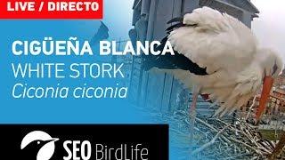Cigüeña blanca SEO/BirdLife - Alcalá de Henares