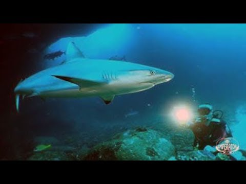 Dive in Mauritius with Dive Dream Divers