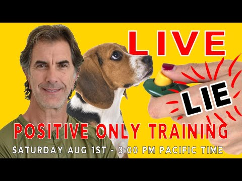 Positive ONLY Dog Training LIE