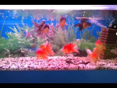 Фронтоза - рыборазводня в Мариуполе. Оптовая продажа аквариумных .