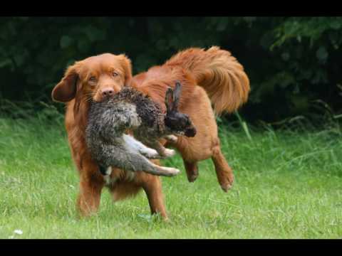kay-lo trainen met een konijn