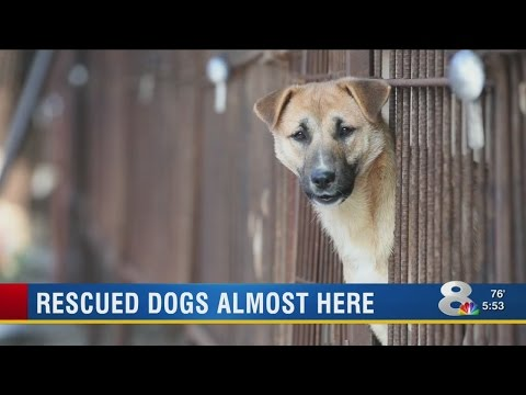 14 dogs come to Tampa after being rescued from South Korea meat farms