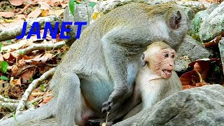 JANET GETS PUNISHMENT BY MOM JANE BECUS SHE ALWAYS DISTURB HER AND BABY MONKEY JANNA