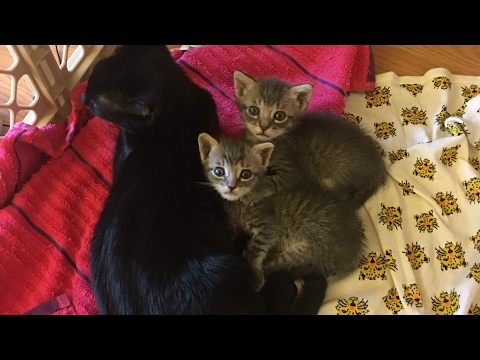 Feral Kitten Tulip Adopts Baby Kittens!