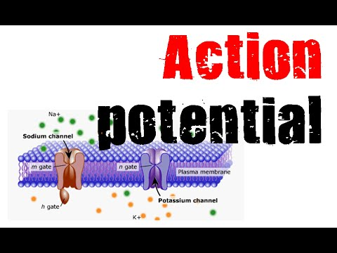 Action potential animation