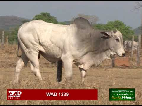 LOTE 25 - WAD 1339