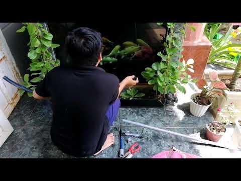 Cá Chết Mấy Chục Triệu Mới Lo Gắn Máy Oxy Tích điện | Cá Koi Vlog Trần Đức Cường