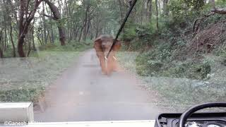 Wild Elephant trying to attack staff bus watch fully.....