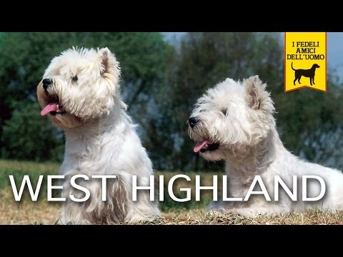 WEST HIGHLAND WHITE TERRIER e CAIRN TERRIER trailer documentario