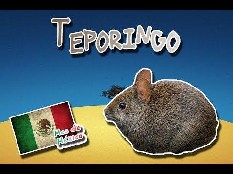 Teporingo |El conejo prehispanico de los volcanes| (Animales del mundo) |Mes de México|