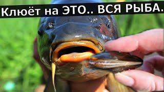 Супер Рыболовная Насадка БЕЗЗУБКА Активатор клёва на Карася
