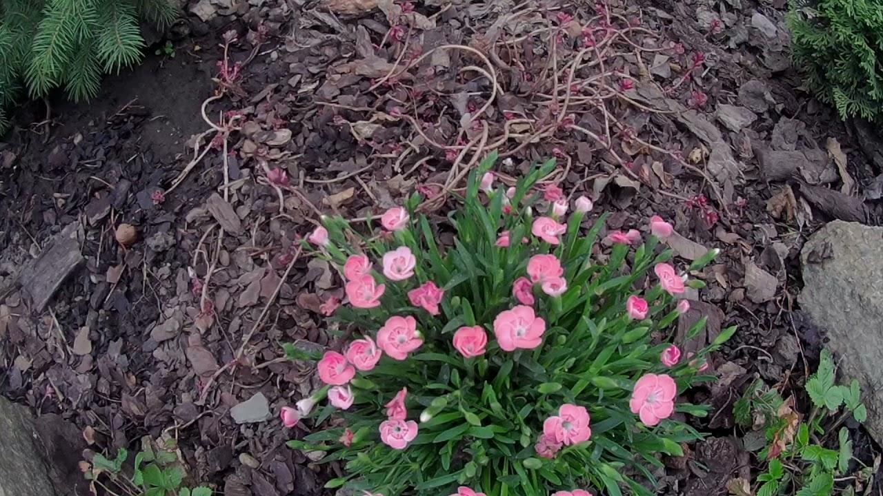 Начало весны сад потихоньку оживает.