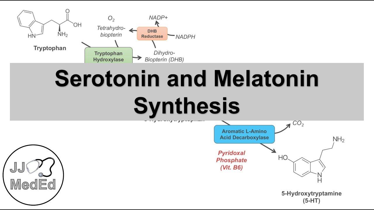 Serotonin and Melatonin Synthesis   Tryptophan Metabolism