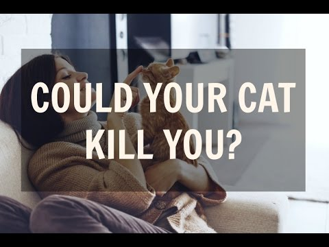 Could Your Cat Kill You? (What Is Cat-scratch Disease?)