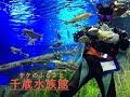 サケのふるさと館 千歳水族館 サーモンパークへ行ってきたよー!