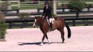 Video of DASHING ridden by CHRISTOPHER PAYNE from ShowNet!