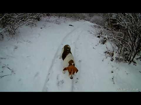 мужчины: финансовый, щобор подранка лося по снегу простой лесник