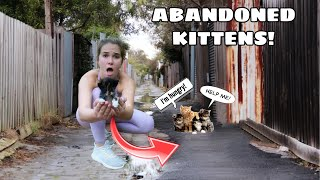 MANGE INFESTED KITTENS RESCUED FROM ALLEY!