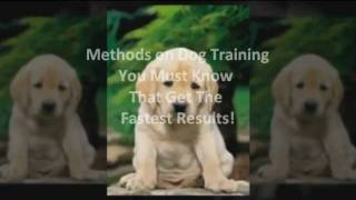 Obedience Dog Training - How To Stop A Dog Jumping On People
