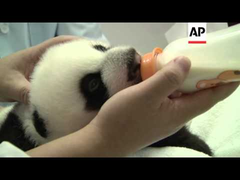 Rare panda triplets are two months old