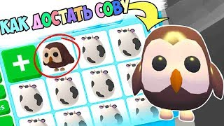 How to get an Owl!!! farm eggs in adopt mi. farm egg adopt me in roblox