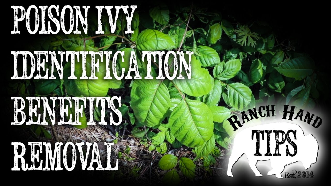 Poison Ivy All You Need To Know Youtube