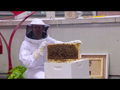 Breast Cancer, Asteroids, Bees, And More! | Simply Science