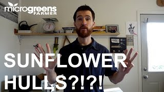 8 steps to solving sunflower seed hull issues   Microgreens Farmer