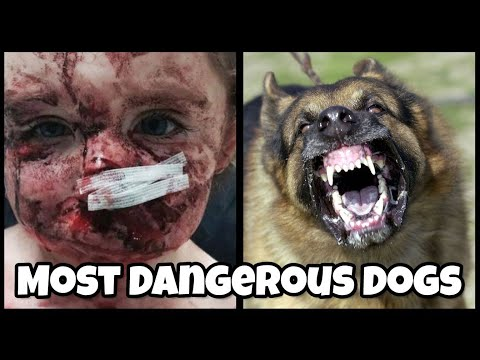 Top 10 DANGEROUS DOG BREEDS In The World 2020