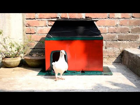 Simple Pigeon House Made Out of Corrugated Fiberboard Box   Building Pigeon Coop Easy