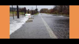 [React] Salmon return across flooded road in Washington, the scenery is so beautiful