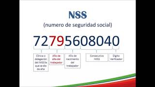 ¿Cómo se conforma el Número de Seguridad Social (NSS) del IMSS?