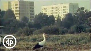 Дни и ночи Чернобыля (1986)