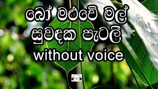 Bo Maluwe Mal Karaoke (without voice) බෝ මළුවේ මල්
