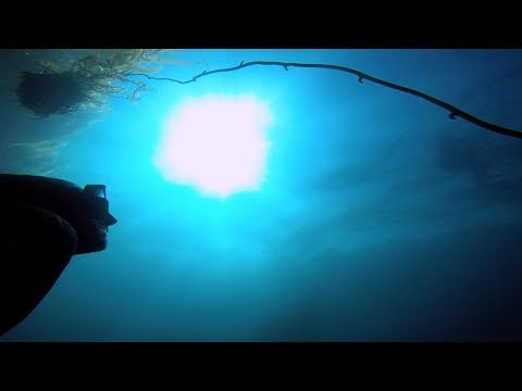 Freediving GoPro | October 1st | 2017 (Edit)