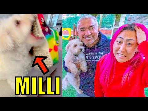 MY DOG BIT ME!! | Dog Whisperer CESAR MILLAN (Can he help?!)