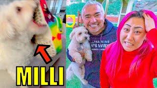 MY DOG BIT ME!!   Dog Whisperer CESAR MILLAN (Can he help?!)