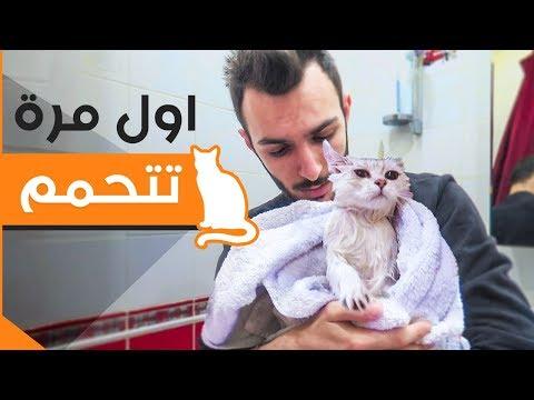 قط يتحمم لاول مرة _ ( مات من الرعبة )