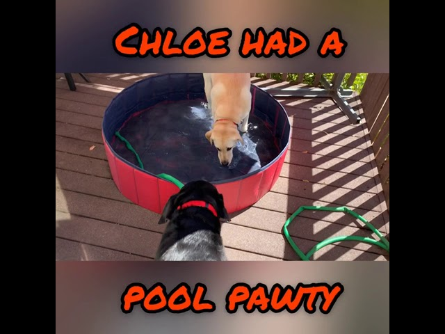 CHLOE'S STAY-CATION