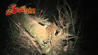 Леопард. Два поколения Leopard