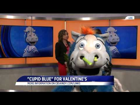Colts mascot Blue to deliver Valentine