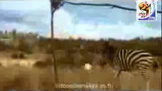 Download Shakira - Waka Waka (Version De Los Animales) MP3 song and Music Video