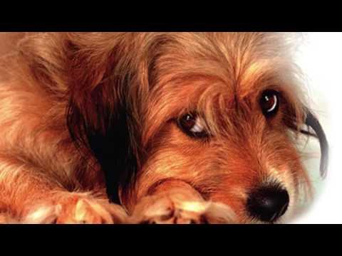 I Feel Love (Benji's Theme)  : Charlie Rich