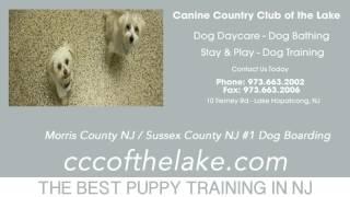Puppy Training Newton Nj