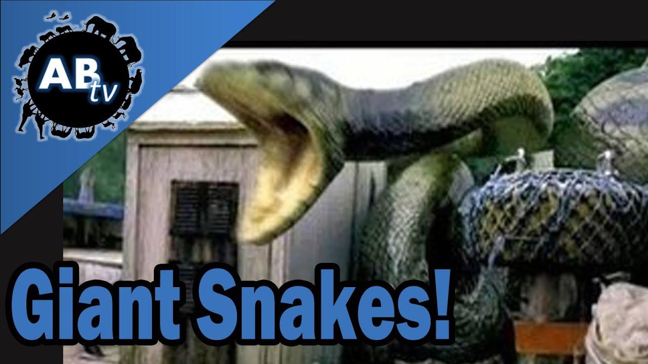 Giant Snakes! SnakeBytesTV : AnimalBytesTV - YouTube
