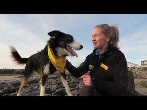 Dogs Trust Salisbury -  Loki
