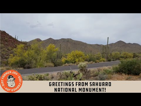 Greetings from Sahuaro National Monument!