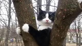 ЧЕРНО БЕЛЫЙ кот СТЁПКА 9
